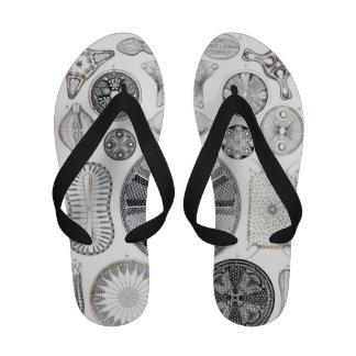 diatom flipflops sandals