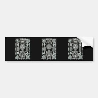 Diatoms Car Bumper Sticker