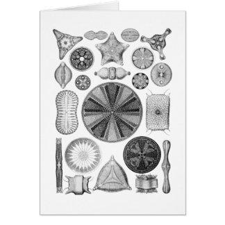 Diatoms Greeting Card