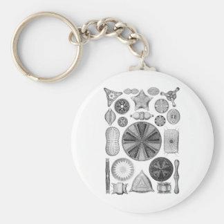 Diatoms Keychain