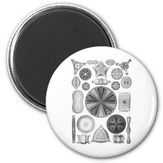 Diatoms 2 Inch Round Magnet