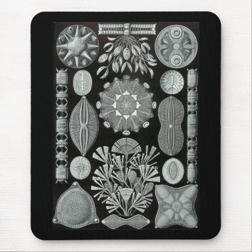 Diatoms Mouse Pad
