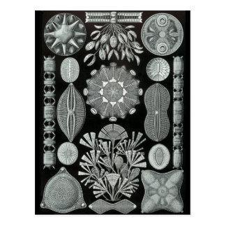 Diatoms Postcard