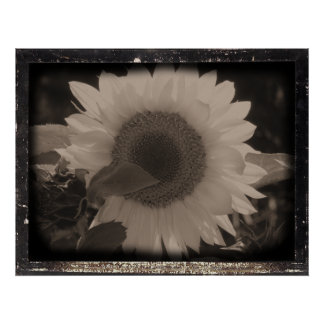 Diatrope Sunflower IV Poster