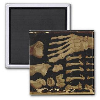 Dibujo anatómico de los huesos del pie imán cuadrado