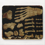 Dibujo anatómico de los huesos del pie alfombrilla de ratón
