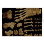 Dibujo anatómico de los huesos del pie tarjeta de felicitación