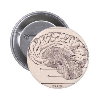 Dibujo anatómico del vintage: el cerebro pins