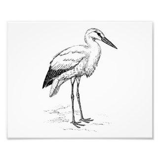 Dibujo animado blanco y negro del pájaro de la fotografía