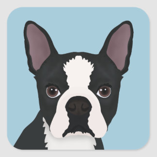 dibujo animado del terrier de Boston Pegatina Cuadrada