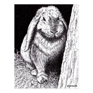 dibujo animal del conejo vago postales