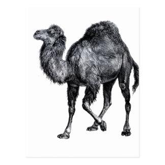 Dibujo animal levantado pie derecho del vintage de tarjeta postal