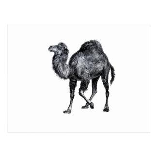 Dibujo animal levantado pie derecho del vintage de tarjetas postales