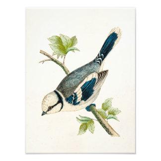 Dibujo azul de los pájaros del pájaro cantante del fotografías