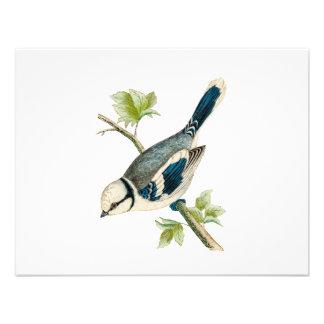 Dibujo azul de los pájaros del pájaro cantante del comunicados personalizados