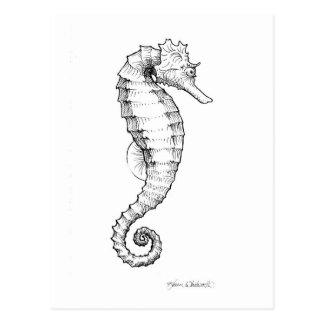 Dibujo blanco y negro del Seahorse Postales
