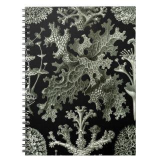 Dibujo blanco y negro hermoso de los liquenes libros de apuntes