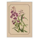 Dibujo botánico del vintage del Fireweed salvaje Felicitacion