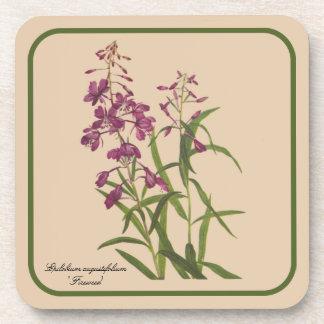 Dibujo botánico del vintage del sistema del prácti posavasos