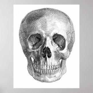 Dibujo de bosquejo humano de la anatomía del cráne poster