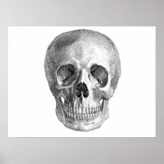 Dibujo de bosquejo humano de la anatomía del cráne posters