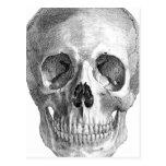 Dibujo de bosquejo humano de la anatomía del cráne tarjetas postales