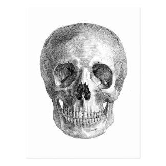 Dibujo de bosquejo humano de la anatomía del tarjeta postal