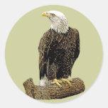 Dibujo de Eagle calvo Etiquetas Redondas
