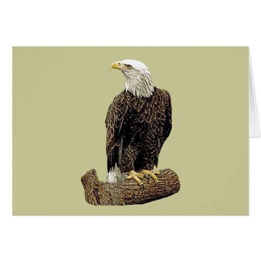 Dibujo de Eagle calvo Felicitacion