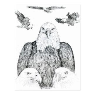 Dibujo de Eagle calvo Postal