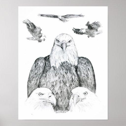 Dibujo de Eagle calvo Posters