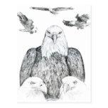 Dibujo de Eagle calvo Tarjetas Postales