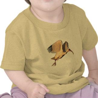 Dibujo de Ibis Camisetas