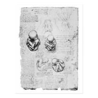 Dibujo de la anatomía del vintage de un feto tarjetas postales