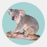 Dibujo de la koala etiquetas redondas