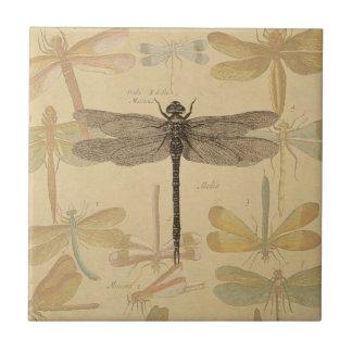 Dibujo de la libélula del vintage azulejo cuadrado pequeño