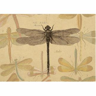 Dibujo de la libélula del vintage escultura fotografica