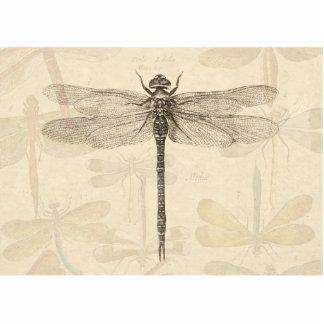 Dibujo de la libélula del vintage esculturas fotográficas