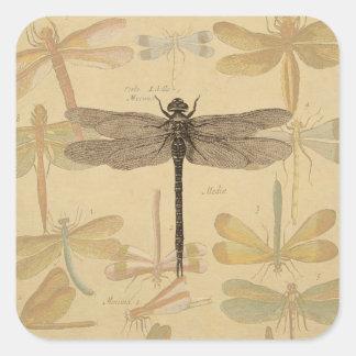 Dibujo de la libélula del vintage pegatinas cuadradas
