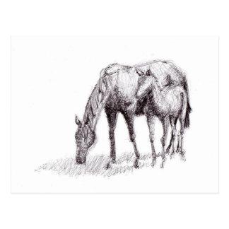 Dibujo de la pluma del caballo y del potro tarjetas postales