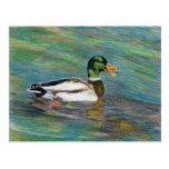 Dibujo de lápiz coloreado pato del pato silvestre postal