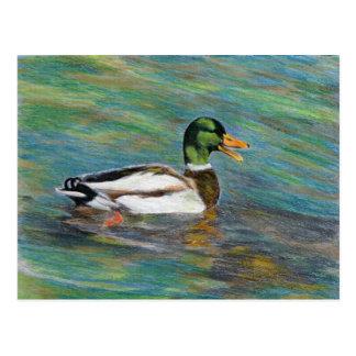 Dibujo de lápiz coloreado pato del pato silvestre postales