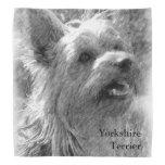 Dibujo de lápiz de Yorkshire Terrier Bandanas