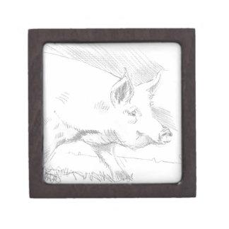 Dibujo de lápiz del cerdo cajas de recuerdo de calidad