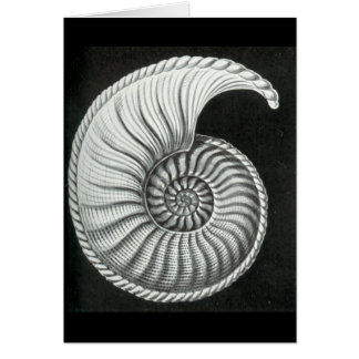 Dibujo de lápiz hermoso de la amonita de Amaltheus Tarjeta De Felicitación