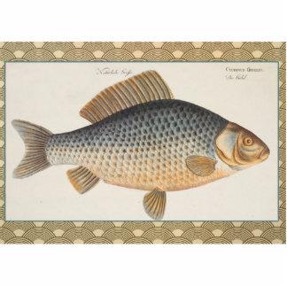 Dibujo de los pescados de agua dulce de la carpa escultura fotografica