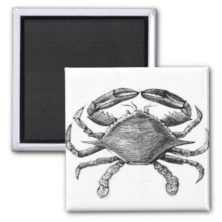 Dibujo del cangrejo del vintage imán cuadrado