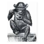 Dibujo del chimpancé del bebé del vintage postal