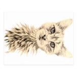 Dibujo del gato blanco en la postal