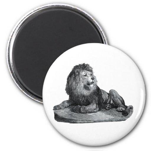 Dibujo del león del vintage que se sienta en anima imán para frigorífico